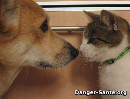 asthme chat chien photo