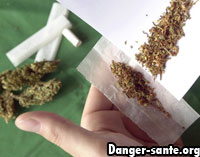 Dangers Cannabis