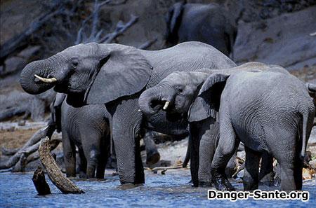 photos botswana afrique