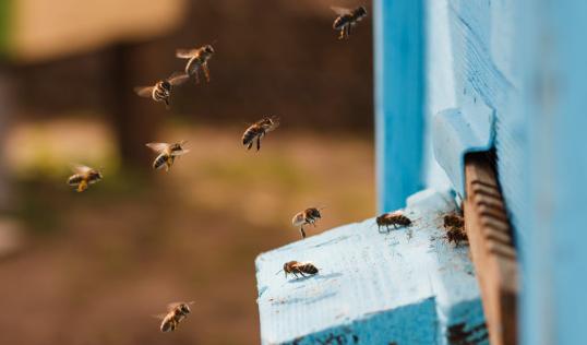 Soin avec les abeilles